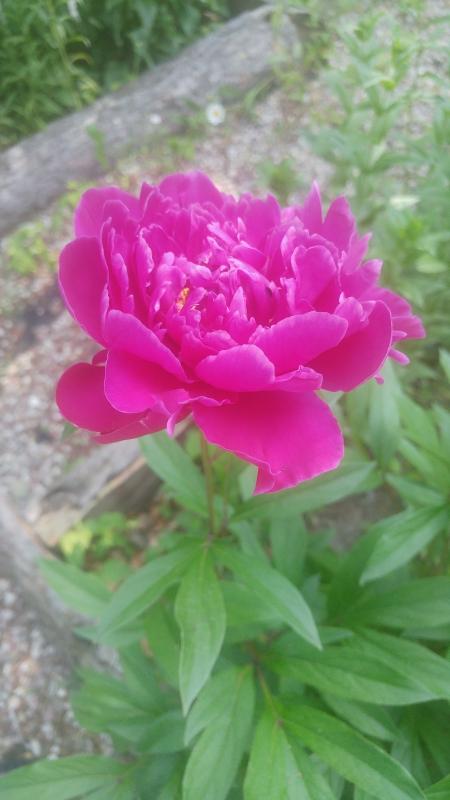 Kolory w szkolnym ogrodzie dydaktycznym – kwitnące rośliny rajem dla owadów