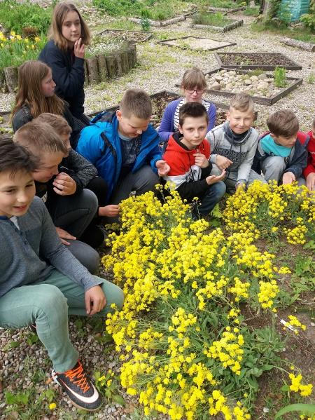 Pachnące lekcje w ogrodzie szkolnym czy wirtualna podróż po ogródku?