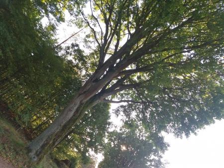 OBCHODY DNIA KRAJOBRAZU 2020* i  Święto drzewa ( z kalendarza świąt ekologic