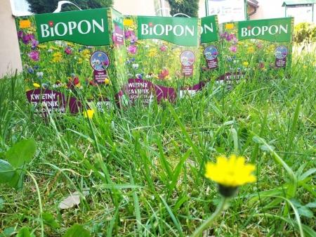 Łąka kwietna na terenie naszej szkoły-realizacja projektu w ramach konkursu powiatowego